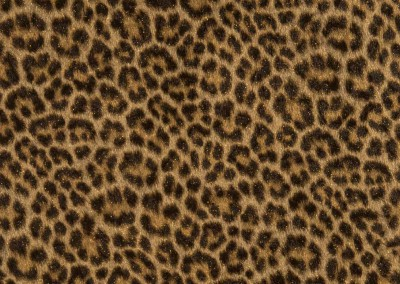 002-selectaparati-animalier-255056